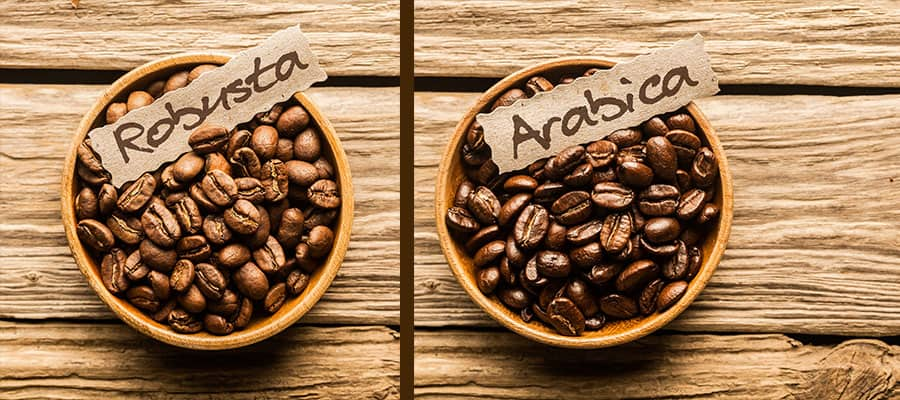 What is the difference between Arabica and Robusta