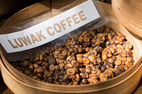 The Most Expensive Coffee in the World - Kopi Luwak