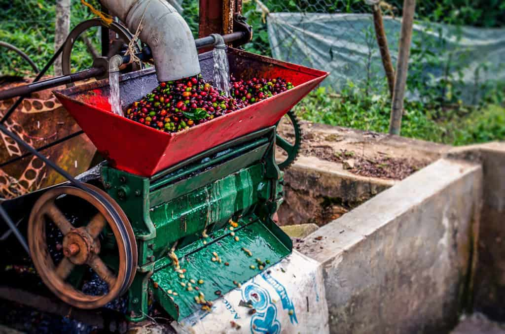 Costa RIca Coffee Processing